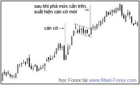Hoc maxi-forex