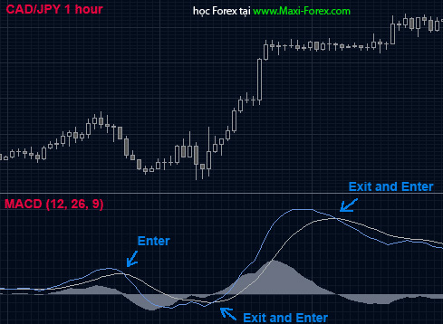 strategy7-maxi-forex